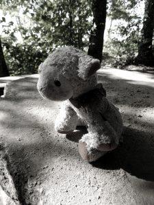 teddy-bear-433697_1920
