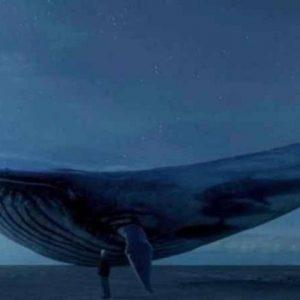 Baleia Azul, o jogo de desafios que estimula o suicídio de jovens